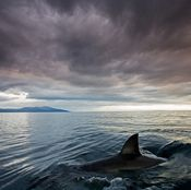 """the shark in this promotional image as the """"Shark of Darkness."""" And in the """"documentary"""" by..."""