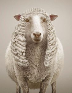 Staudinger+Franke is an award winning photography, post production & CGI studio based in Vienna, Austria. Wooly Bully, Award Winning Photography, Little Bo Peep, Counting Sheep, Cow Art, Creative Advertising, Antique Photos, Oita, Animal Rights