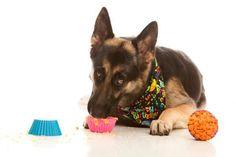 4 recetas de cupcakes para perros - ¡Fáciles y deliciosos!. ¿Has oído hablar de los pupcakes y no has podido resistir la tentación de prepararlos para tu peludo compañero? ¡Estás de suerte! En ExpertoAnimal compartimos cuatro...