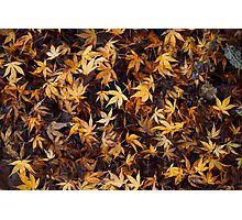 'Autumnal carpet ' by Helen Kelly