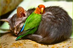 First, there is a most unusual friendship expressed here between a cat ...