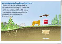 """""""Los eslabones de la cadena alimentaria"""" (Presentación de Ciencias Naturales de Primaria)"""