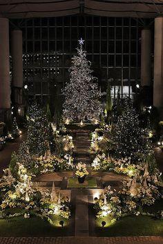 Christmas flower show, Kiseki no Hoshi Botanical museum, Awaji, Hyogo, Japan