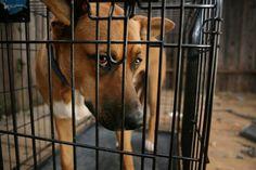 Animal Shelters | PETA.org
