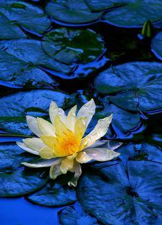 Rain Of Flower Petals Untitled