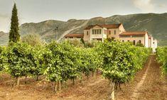"Agrotour ""Wine tasting"" in Nemea,Messinia,Korinthia, Gargalianoi, Pyrgos Messinia by Trigilidas travel White Wine Grapes, Greece Holiday, Travel Tours, Wine Tasting, Athens, Wines, Vineyard, Country Roads, Trips"