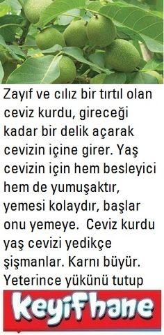 Ceviz Kurdunun Hikayesi #CevizKurdu #Hikaye #Bencillik #Açgözlülük Sprouts, Green Beans, Vegetables, Vegetable Recipes, Veggies
