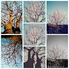 Photo about Trees collage in winter with out leaves. Image of beautiful, completely, darkblue - 64520521 Tree Collage, Photo Tree, Trees, Leaves, Stock Photos, Autumn, Winter, Image, Beautiful