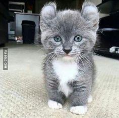 Such cuteness much wow, I wish it was mine