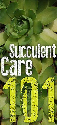 Succulent Care 101 - Infinity Lawn & Garden
