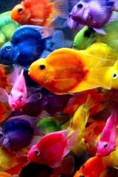 {Rainbow } Fish - Somewhere over the rainbow, colorful fish fly. Rainbow Fish, Over The Rainbow, Rainbow Colors, Bright Colors, Ocean Colors, Rainbow Things, Bright Art, Neon Rainbow, Rainbow Brite