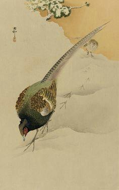 Pheasants in Snow