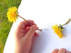 Dandelion sap works really well as invisible ink! Get the children to pick a flower and then mark make with the sap from the stem. To reveal what they have done, either leave in the sun to dry or heat on a radiator. Their work will magically appear! Writing Area, Pre Writing, Kids Writing, Eyfs Activities, Summer Activities, Learning Activities, Nursery Activities, Abc Does, Eyfs Outdoor Area