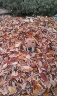 Where's Goldie?
