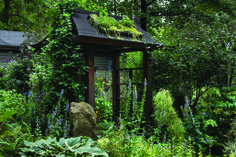 Miriam's River House Designs, Grand Award, Japanese Green Roof Arbor, Residential Installation Under $15,000