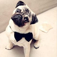 cuter than your groom...
