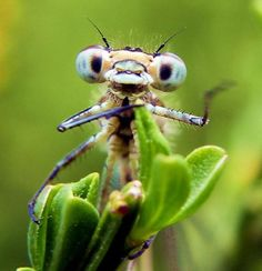 10 Insects That Look Like Aliens Cool Insects, Bugs And Insects, Aliens, Beautiful Bugs, Lovely Eyes, A Bug's Life, Reptiles And Amphibians, Do It Yourself Home, Nature Animals