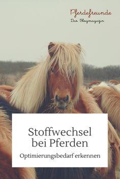 Stoffwechsel bei Pferden - Optimierungsbedarf erkennen