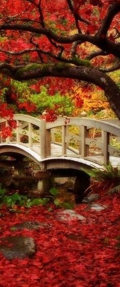 Japanese garden at Royal Roads University in Victoria, British Columbia, Canada