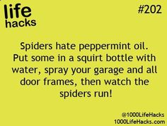 1000 Life Hacks. I have looked for peppermint oil several times because Ill try just about anything to not have spiders!!
