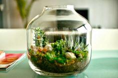 de tout et de liens : blog culture et lifestyle: Terrarium ou jardin sous verre
