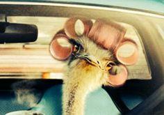 Faróca's Blogue - Me My Self And I:  OPENFATBOOK, o FaceBook das FiNaNçAs  Owl, Bird, Facebook, Owls, Birds