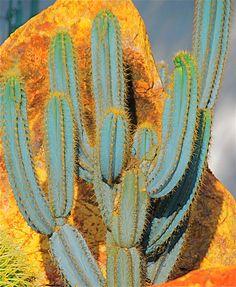 Todas son llamativas, pero el golpe de efecto de las plantas suculentas se acentúa si buscamos color.