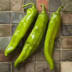 Heritage Big Jim is a NEW variety developed and released by Dr. Paul Bosland at NMSU.  It has 5 times the flavor compounds than the NuMex Big Jim.  They are large chilies that average 8.5 inches in length with many up to and over 12 inches.  This is considered a Hot chile and is becoming a customer favorite! Hatch Chili, Seeds For Sale, New Mexico, Stuffed Hot Peppers, Chile, Big, Green, Gardening, Times