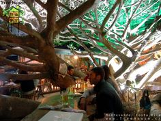 Tree house restaurante and cafe, Monteverde, Costa Rica = So fun! A tree is growing through the restaurant!