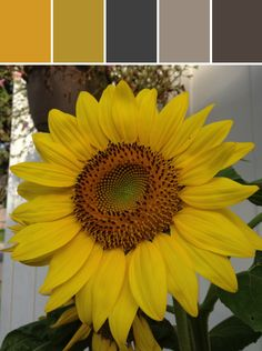 Sunflower Designed By Colleen M Cole via Stylyze #colourpalettesilove