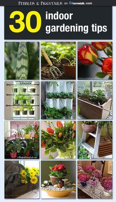 If you don't have much outdoor space, you could DEFINITELY use these awesome indoor gardening tips! So cool!
