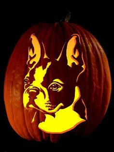 boston terrier pumkins | Boston Terrier Pumpkin! | Love these things & places