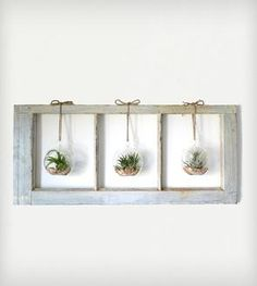 Window Frame Terrarium - 3-Pane
