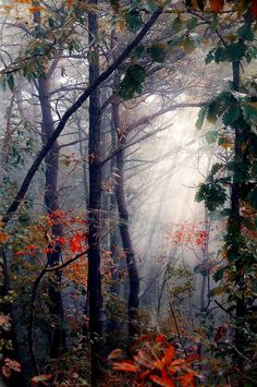 Light in the forest - photo by haerang