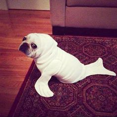 Pet Parade: 50 Ridiculously Adorable Animals in Costume