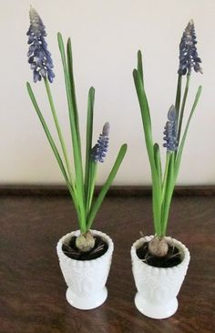 Blue Muscari Bulb Flowers