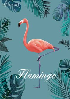 #flamingo  #Botanical   #animal   #Nordic   #image   #illustration   #npine   #iclickart   #stockimage   #art   #style    #플라밍고   #보테니컬   #아트   #스타일   #북유럽   #일러스트   #엔파인   #아이클릭아트   #스톡이미지