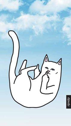 Gato mal educado