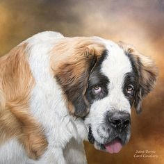 Saint Bernard Portrait by Carol Cavalaris. Prints available at Fine Art America. Saint Bernie The St. This painting of a St. Bernard puppy is from the Dogs & Cats collection of art by Carol Cavalaris. St Bernard Dogs, Thing 1, Cat Wall, Dog Paintings, Fauna, Funny Animal Pictures, Dog Art, Mans Best Friend, Pet Portraits