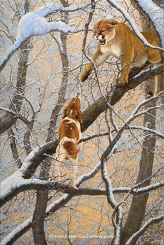 """Wildlife art: """"Fifteen Feet Up"""" A hound has treed a cougar (mountain lion). By Tom Mansanarez Hunting Art, Hunting Dogs, Wildlife Paintings, Wildlife Art, Art Paintings, Mountain Lion, Hound Dog, Western Art, Animal Drawings"""