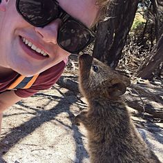 The locals are very friendly in WA. #quokka #mammal #marsupial #friendly #kiss #cute #adorable #curious #sniff #wild #wildlife #native #nativewildlife #rottnest #island #tourist #tourism #bush #bikeride #rottnestisland #westernaustralia #australia #nofilter by that.dan.guy http://ift.tt/1L5GqLp