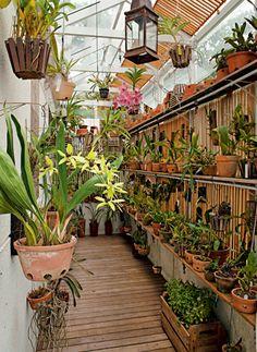 cultivando Orquídeas e idéias: COMO MONTAR UM ORQUIDARIO EM CASA