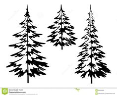 Black And White Pine Tree Outline Sketch Coloring Page
