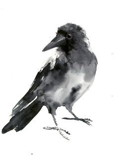 Crow, bird artwork o