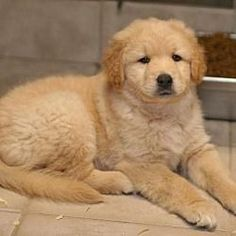 Pet Adoption has dogs, puppies, cats, and kittens for adoption. Adopt a pet Cute Puppies, Dogs And Puppies, Baby Animals, Cute Animals, Golden Retriever Mix, Shelter Dogs, Four Legged, Mans Best Friend, Pet Adoption
