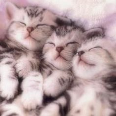 3 little kittens....awwww cute lil noses ;)