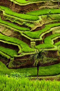 Bali Rice Terraces, Candidasa, Bali. www.villapantaibali.com  Don't forget when traveling that electronic pickpockets are everywhere. Always stay protected with an Rfid Blocking travel wallet. https://igogeer.com for more information. #igogeer