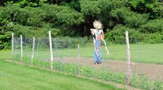 The kiddos and I made a scarecrow yesterday. It is one of those things we have wanted to make but just never seem to get around to it. Well this year I have already replanting my pumpkin patch twic… Make A Scarecrow, Scarecrow Ideas, Scarecrows For Garden, Brown Hair With Blonde Highlights, Backyard Garden Landscape, Party Hats, Fall Decor, Outdoor Decor, Fairies Garden