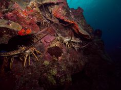 Photo - Google Photos Belize Diving, Photo And Video, Google, Photos, Painting, Art, Art Background, Pictures, Photographs