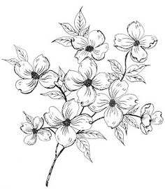Dogwood Flower Designs Drawings Sketch Coloring Page Easy Flower Drawings, Flower Sketches, Simple Flower Drawing, Plant Sketches, Dogwood Trees, Dogwood Flowers, Draw Flowers, Flowers Garden, Spring Flowers